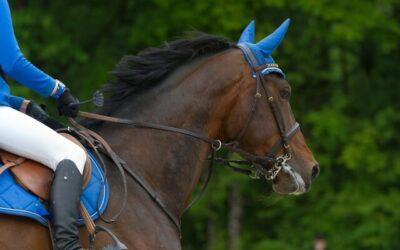 4 Tage Pferdesport der Extraklasse